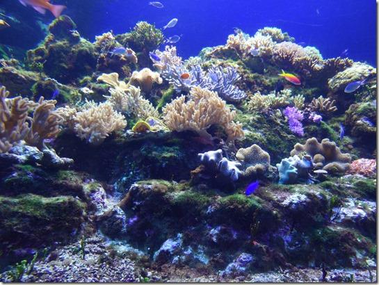 新江ノ島水族館を子供とお得に満喫する方法。夏休みに江の島で思い出を作る。