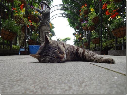庭園のねこちゃん